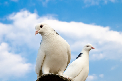 The Dove and The Dissenter